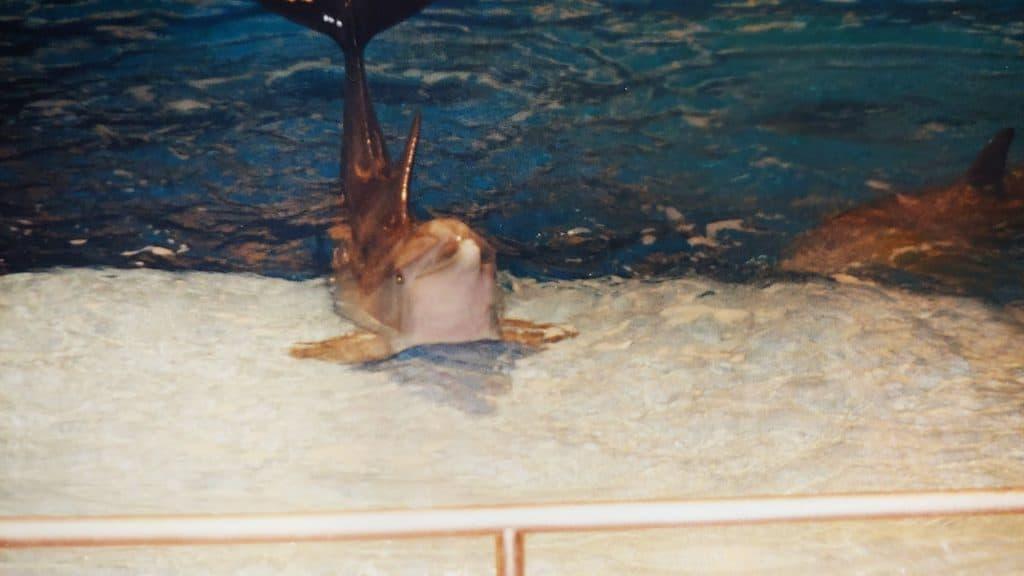 Dolphin on platform