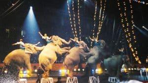 Circus elephants doing tricks
