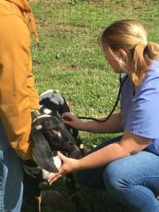 Animal science practice in the field. Homeschool tips that begin with the letter Z. Zoology