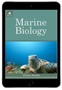 Zoology classes for Homeschool tips that begin with the letter Z.